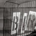 名作「ショーシャンクの空に」には続きがあった!? ティム・ロビンスが仕掛ける社会貢献、刑務所ドラマの第二章とは?